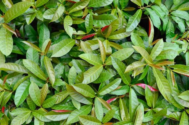 Zielony krzew