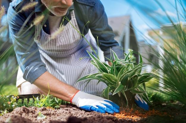 Zielony kwiat. brodaty dojrzały mężczyzna w białych rękawiczkach i pasiastym fartuchu sadzi mały zielony kwiatek na zewnątrz domu