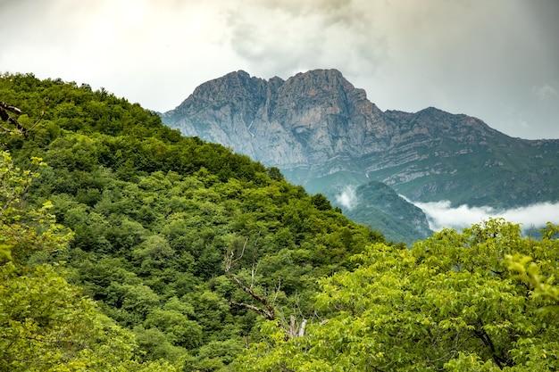 Zielony las i góra pod abstrakcyjnym niebem