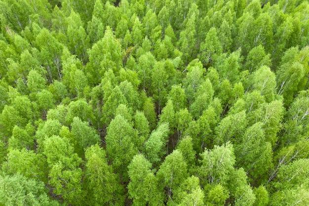 Zielony las jesienią lub wiosną. widok z drona