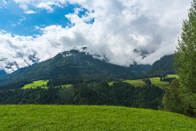 Zielony las krajobraz gór alp