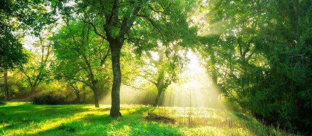 Zielony las krajobraz o wschodzie słońca.