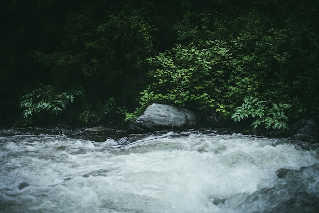 Zielony las krajobraz z dzikimi zaroślami w pobliżu potężnej górskiej rzeki. niewyraźna moc turbulentne bystrza w górskiej potoku w ciemnym lesie. klimatyczna sceneria przyrody z górską rzeką i dziką roślinnością.