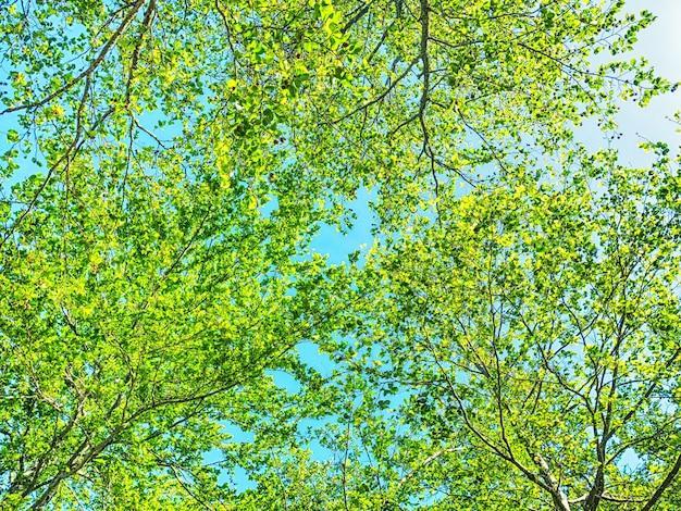 Zielony las na tle błękitnego nieba w słoneczny dzień
