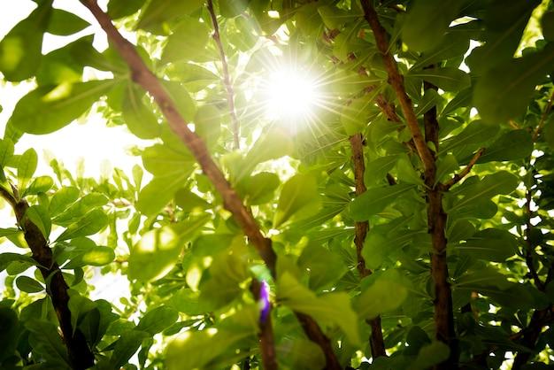 Zielony las natura tło ze światłem słonecznym świeci