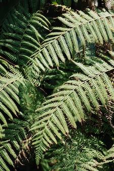 Zielony las paprociowy