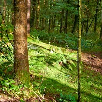 Zielony las przy wschodem słońca
