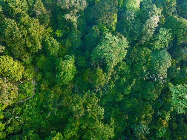 Zielony las w północnej indonezji bengkulu, niesamowite światło w lesie