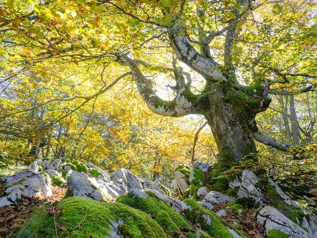 Zielony las z dużymi białymi kamieniami pokrytymi trawą