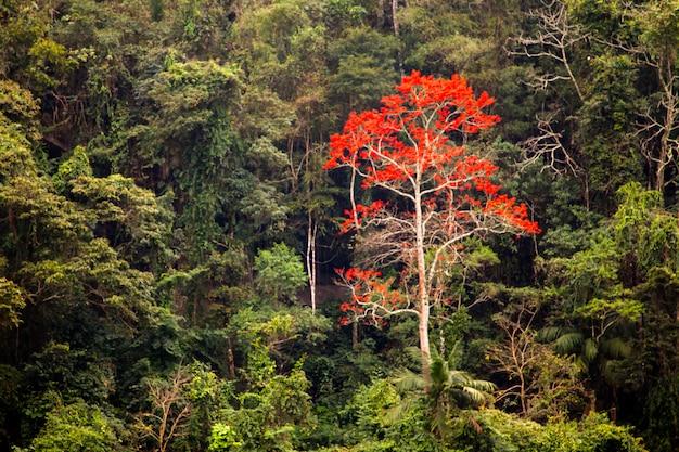 Zielony las z jednym drzewem czerwonych kwiatów