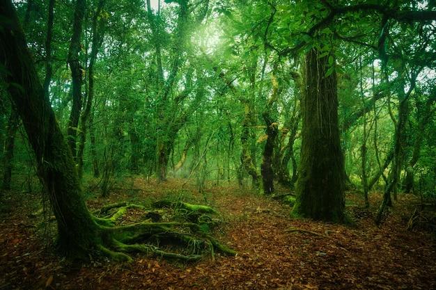 Zielony las z liśćmi na ziemi, z mgłą i słońcem