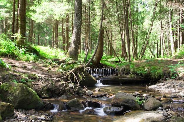Zielony las z rzeką