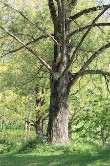 Zielony las z wysokimi drzewami w ciągu dnia