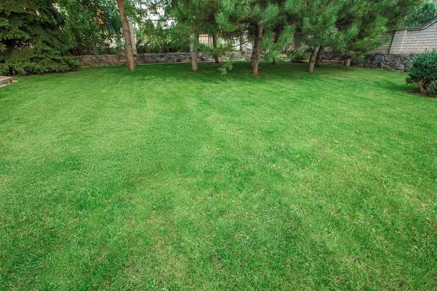 Zielony letni ogród parkowy