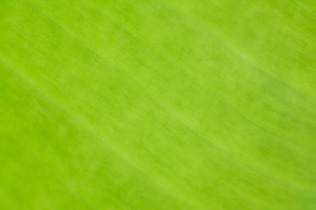 Zielony liść bananowca natura tło rozmycie selektywne skupienie