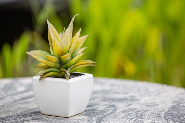 Zielony liść bokeh z pięknym miękkim światłem słonecznym