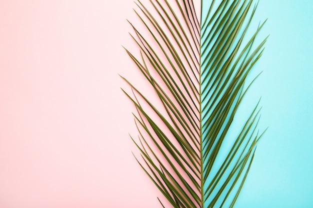 Zielony liść drzewko palmowe na kolorowym tle z kopii przestrzenią