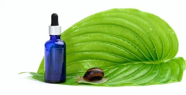Zielony liść i brązowy ślimak siedzi na niebieskiej szklanej przezroczystej butelce z pipetą, łupem produktu na białym tle. kosmetyki naturalne