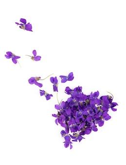 Zielony liść i kwiaty fiołka drewna viola odorata na białym tle na białej powierzchni