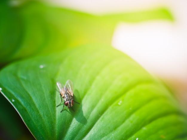 Zielony liść i mucha domowa z widokiem makro