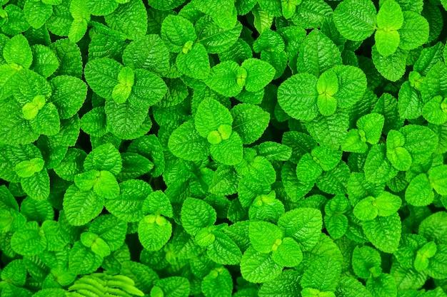 Zielony liść krzaka tło
