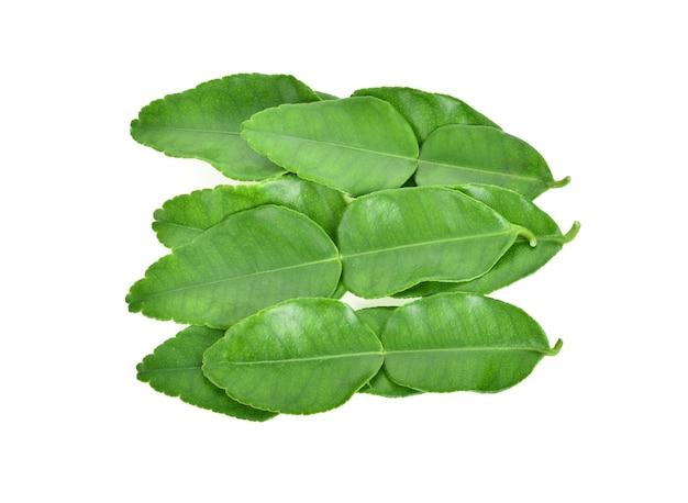Zielony liść, liść bergamotki na białym tle