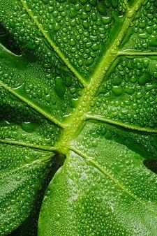 Zielony liść makro z kropli wody z kopiowaniem przestrzeni