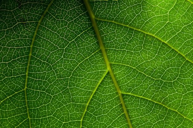 Zielony liść makro