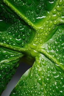 Zielony liść monstery makro z kroplami wody, artystyczna perspektywa, która wygląda jak symbol żeński.
