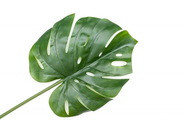 Zielony liść monstery na białym tle, plastikowy liść jako dekoracja