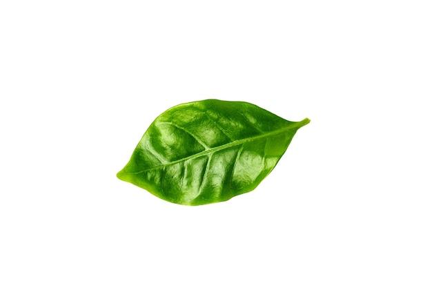 Zielony liść na białym tle, widok z góry