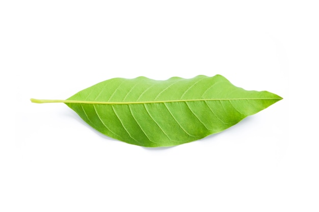 Zielony liść na białym tle.