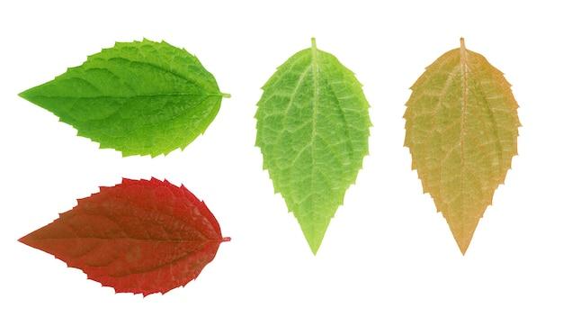 Zielony liść na białym zestawie