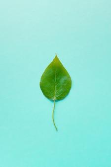 Zielony liść na błękitnym tle, zakończenie. teksturowane tło.