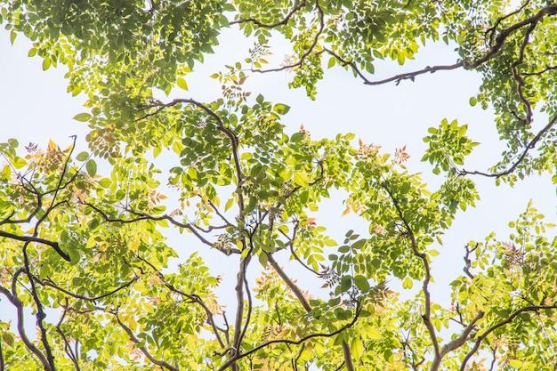 Zielony liść na nieba tle w ogródzie używać jako tło