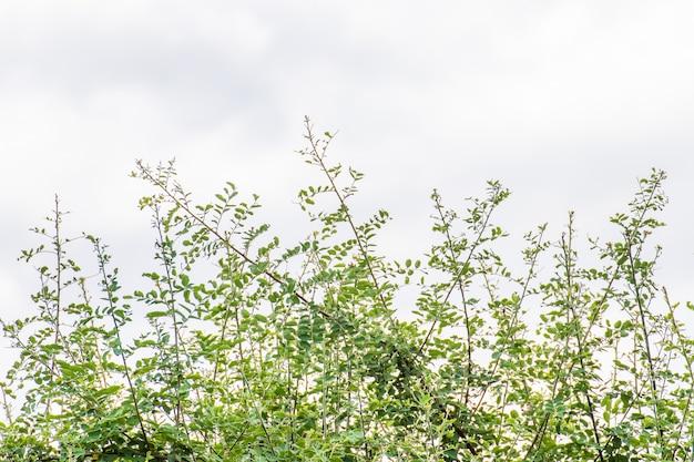 Zielony liść na tle nieba w ogrodzie