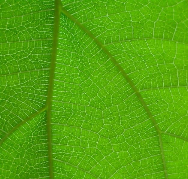 Zielony liść natura tło vintage wybierz konkretną ostrość