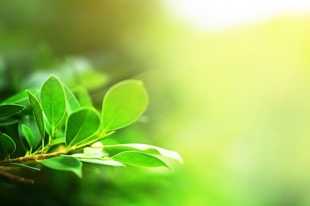 Zielony liść natury tła światła słonecznego kopii specu tło