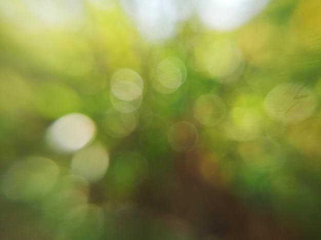 Zielony liść niewyraźne streszczenie tło i białe światło słoneczne bokeh