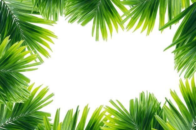 Zielony liść odizolowywający na białym tle drzewko palmowe