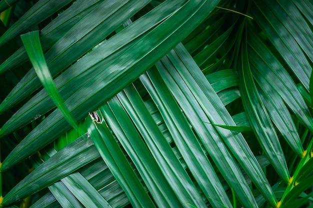 Zielony liść palmowy