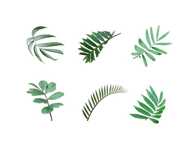 Zielony liść palmy na białym tle z