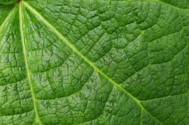 Zielony liść po zbliżeniu deszczu. zielone tło.