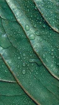 Zielony liść teksturowane tło z kroplami wody