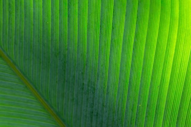 Zielony liść tekstury tło z światłem słonecznym