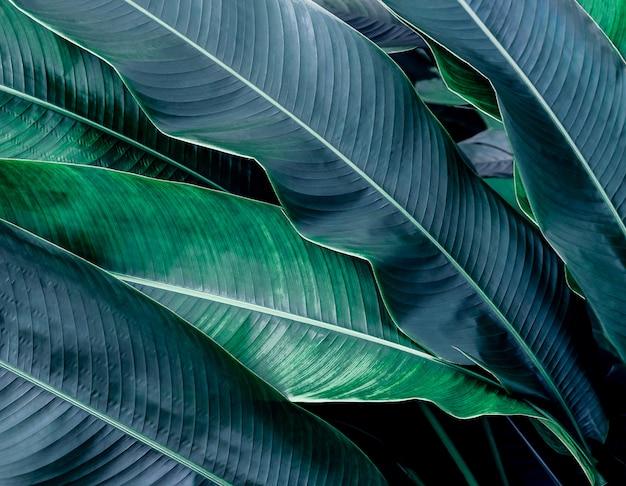 Zielony liść tekstury tło
