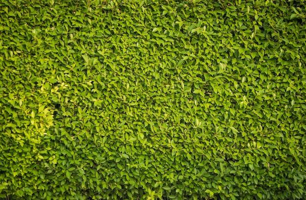 Zielony liść tekstury tło.