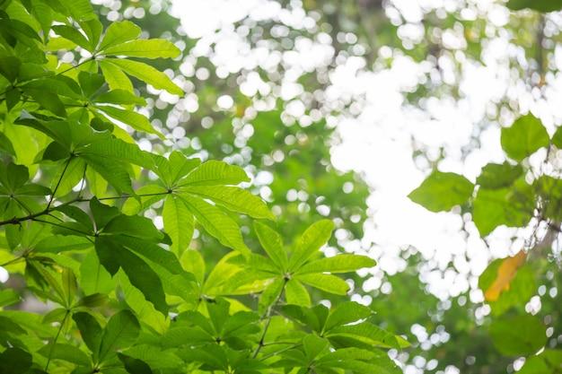 Zielony liść tło w lesie.