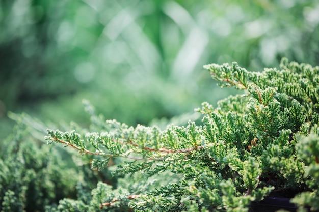 Zielony liść tło.