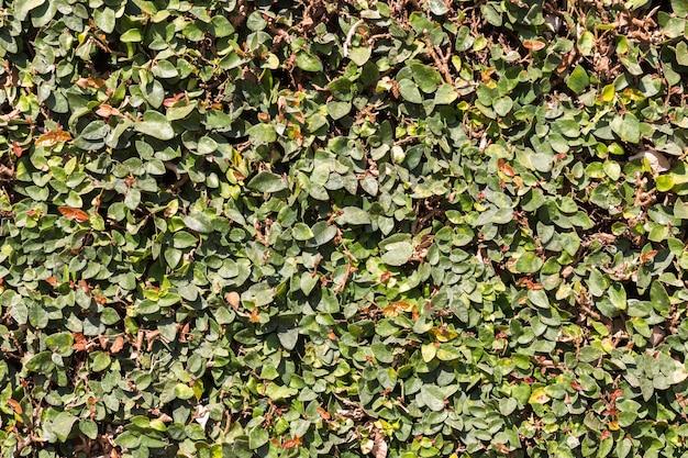 Zielony liść tło
